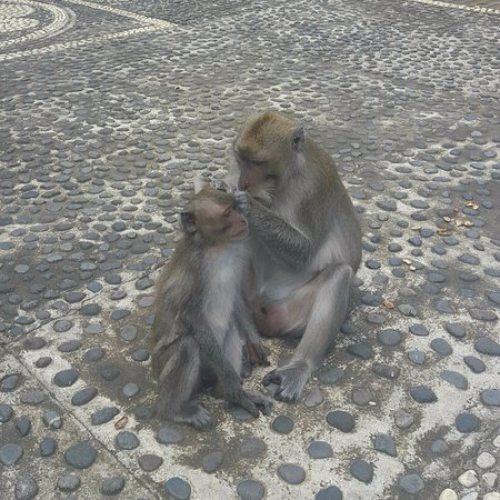 Alas Kedaton: Monkey temple