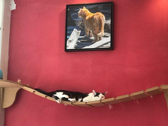 le chat puccino rennes restaurantbeoordelingen tripadvisor. Black Bedroom Furniture Sets. Home Design Ideas