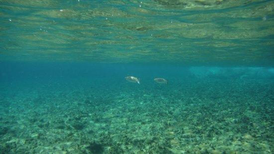 Agios Sostis Beach: mare