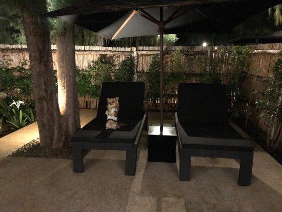 Best Pet Friendly beach hotel