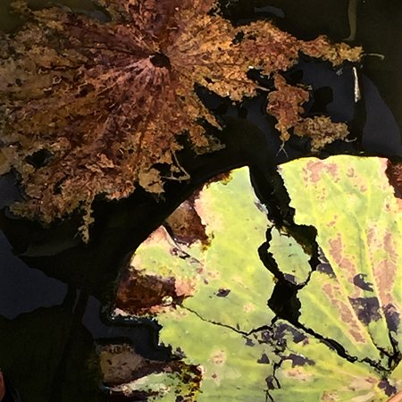 Wayne, PA: Chanticleer - autumnal art in the Lotus pond