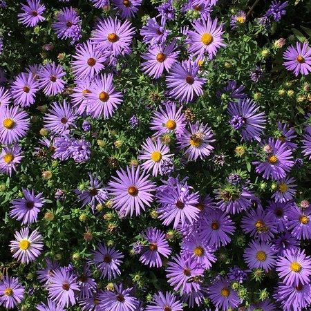 Wayne, Πενσυλβάνια: Chanticleer luscious purples