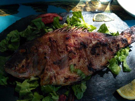 Ταβέρνα Αποθήκη: grilled fish, yammi