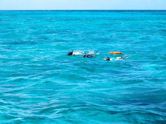 Christiansted, St. Croix: Snorkeling | The Rose Table