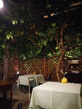Da Paolino Lemon Trees: IMG_20170929_231824_large.jpg