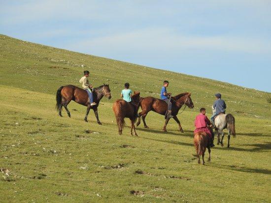 Arkhangai Province, Mongolia: Cavalli