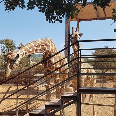 Pafos Zoo: IMG_20170928_195502_130_large.jpg