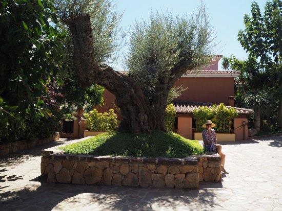 Hotel Cala Ginepro Resort&Spa Photo