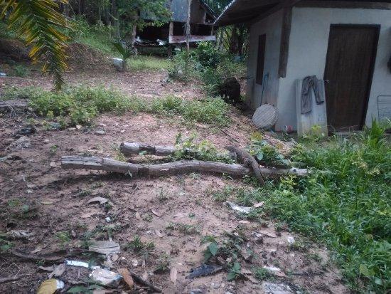 Koh Yao Yai: sur la branche un varan