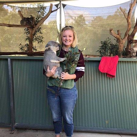 cohunu koala park byford australia top tips before you. Black Bedroom Furniture Sets. Home Design Ideas