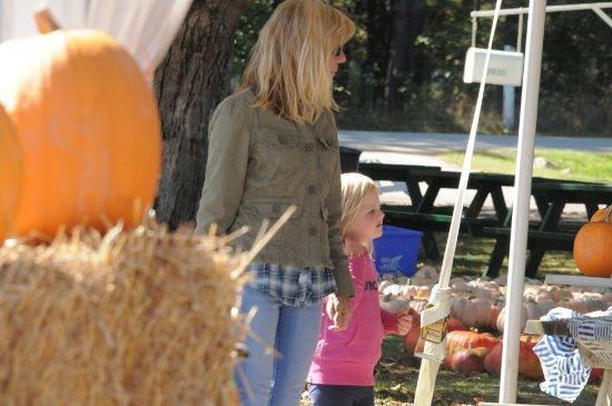Minesing, Canadá: Plenty of pumpkins