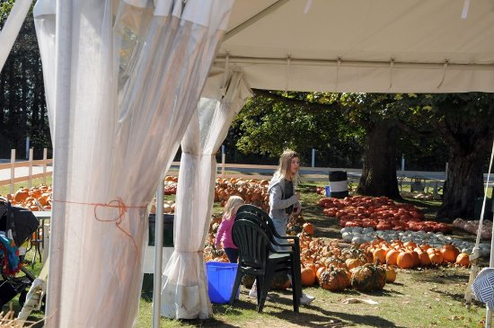 Minesing, Canadá: Many many pumpkins