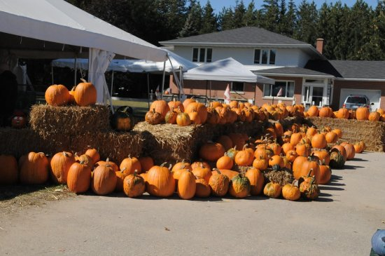 Minesing, Canada: Still more pumpkins