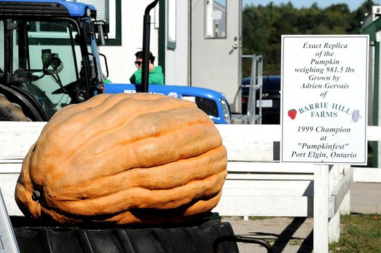 Minesing, Canada: The big pumpkin