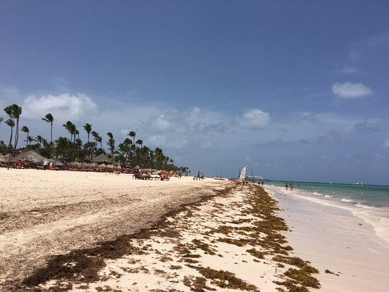 Bavaro Hostel : Nearby Beach