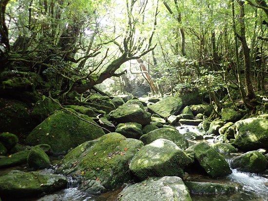 Shiratani Unsuikyo Valley (Kumage-gun Yakushima-cho, Japan): Top Tips Before ...