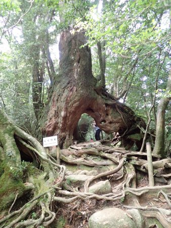 חוות דעת על Shiratani Unsuikyo Valley - Kumage-gun Yakushima-cho, יפן