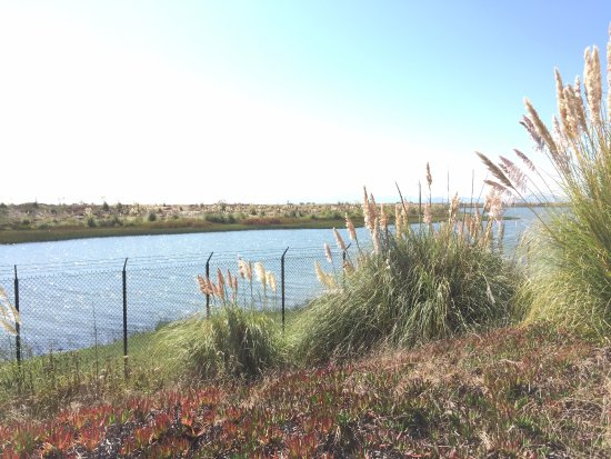 Alameda, CA: Shoreline Park