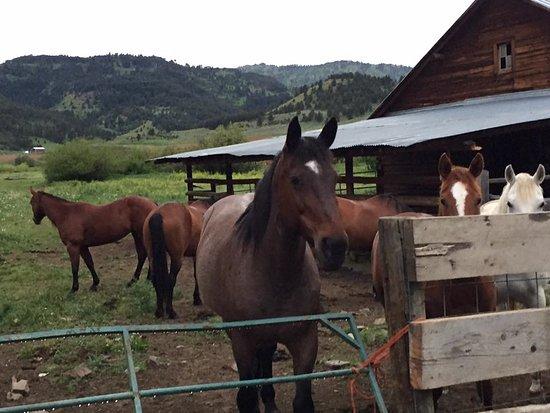 Clyde Park, MT: Horse life
