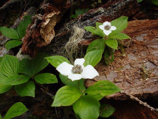 Purden Lake Provincial Park: Purden Lake forest flowers
