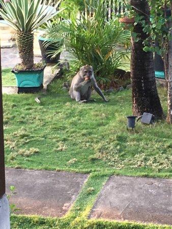 Temukus, Indonesia: Zo geweldig hier ⭐️⭐️⭐️⭐️⭐️⭐️⭐️⭐️⭐️ verblijf 😘😘😘