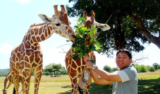 Busuanga Island, Filipinler: Feeding some giraffes at the Calauit Safari Park