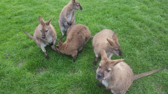 "Waimate, New Zealand: The ""Greedies"" - a very hungry and friendly bunch."