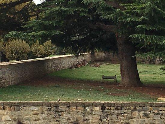 Parque de La Taconera: photo3.jpg