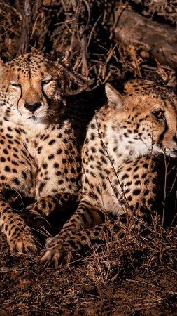 Pongola, Νότια Αφρική: photo0.jpg