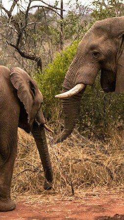Pongola, Νότια Αφρική: photo1.jpg