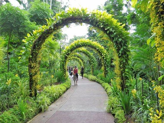 Singapore Botanic Gardens, Orchid Garden