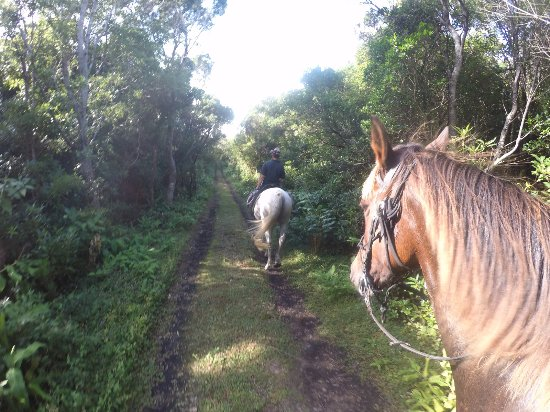 Cedros, Portekiz: Riding through the forest park on the west of Faial