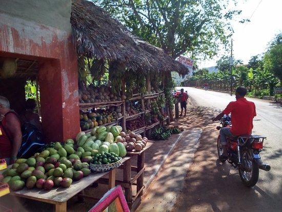 Las Galeras, Dominican Republic: arrêt durant l'excursion quad