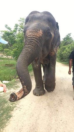 Wildlife Friends of Thailand (Tha Yang): Top Tips Before ...