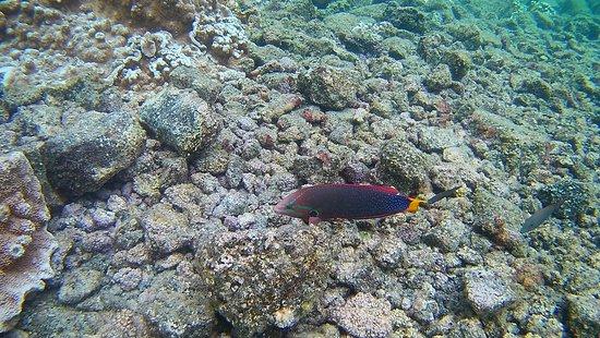 Pahoa, Hawái: Unter Wasser