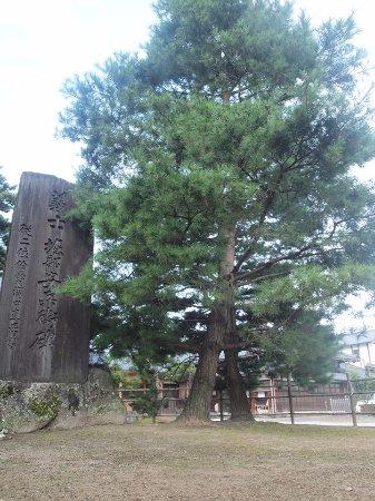 Choutokuji Temple: 安兵衛手植えの松(長徳寺)
