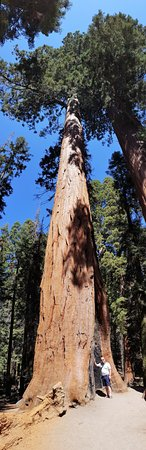 Three Rivers, Kalifornien: Giant Sequoia in the national park