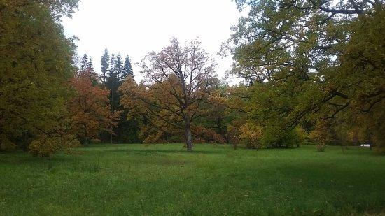 Ломоносов, Россия: Осень!