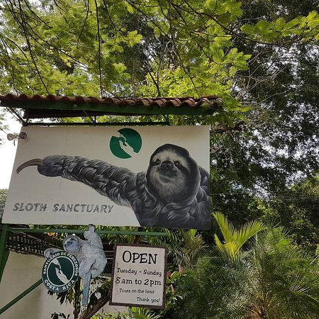 Sloth Sanctuary of Costa Rica : IMG_20170930_101252_460_large.jpg