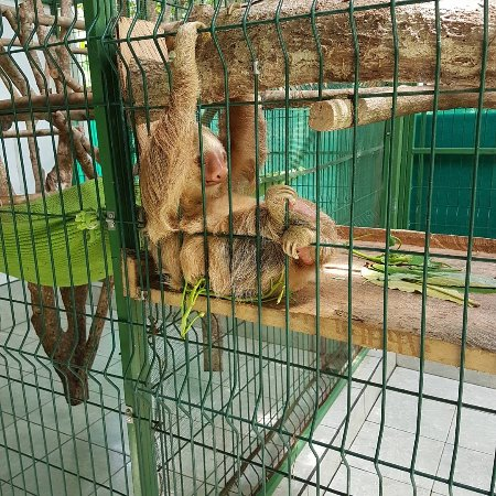 Sloth Sanctuary of Costa Rica : IMG_20170930_101252_490_large.jpg