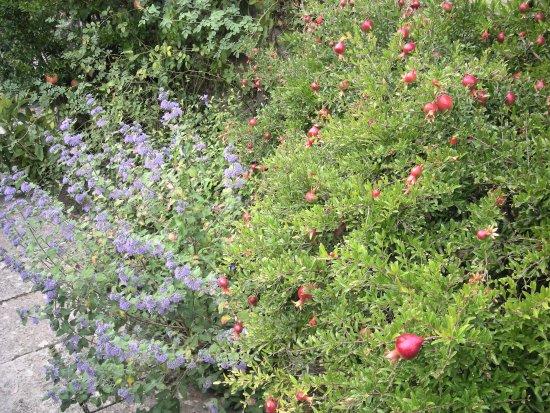 Chianciano Terme, Italy: La Foce melograno e lavanda