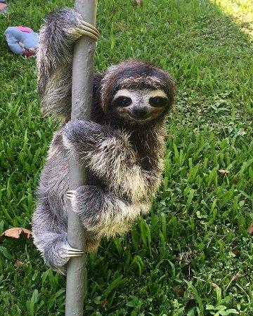 Sloth Sanctuary of Costa Rica : Mister Briggs 😍