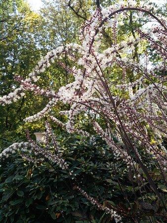 Photo of Botanical Garden Lazienki - Royal Residence Park at Aleje Ujazdowskie, Warsaw 99-200, Poland