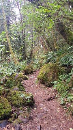 Mapleton, Орегон: Sweet Creek Falls