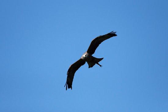 Dungeon of Eagles: Milan noir