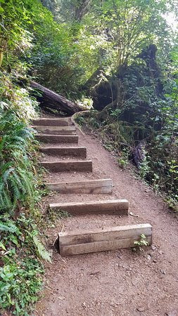 Oregon Coast, OR: The entire road is paved and GPS took us right there but use it before you lose signal. It is of