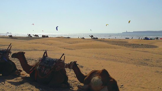 Essaouira Beach: 20170928_174236_large.jpg