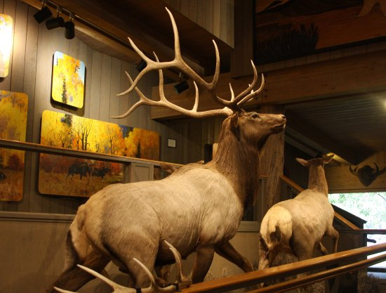 Jackson Hole, WY: An elk display inside.