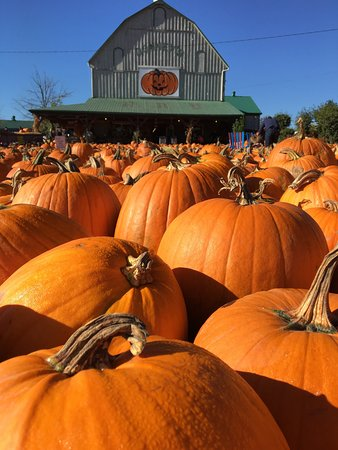 Downey's Farm Market