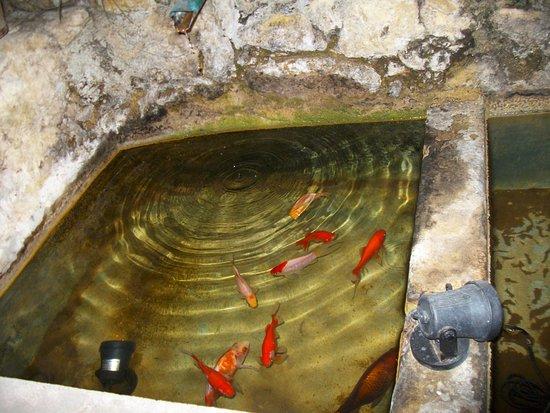 Cadenet, Francja: à l'intérieur il y a une source avec des poissons rouges